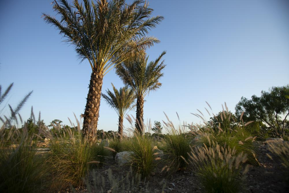 The Savanna in the Global Collection Garden. Photo by Michael Tims courtesy Houston Botanic Garden.