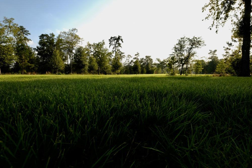 Restored savannah landscape. Courtesy Memorial Park Conservancy.